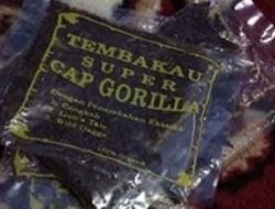 Tembakau Gorila Beredar di Maluku, Kenali Efeknya yang Mematikan